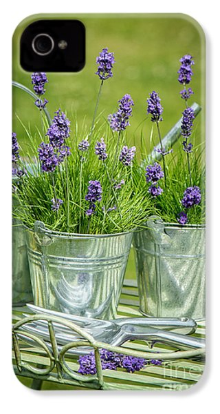 Pots Of Lavender IPhone 4 Case by Amanda Elwell
