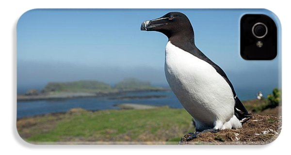 Razorbill On A Coastal Ledge IPhone 4 Case by Simon Booth