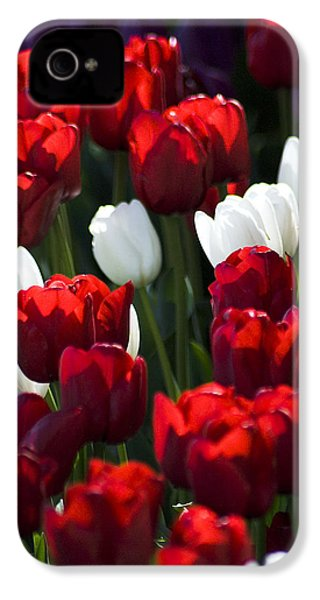 IPhone 4 Case featuring the photograph Red And White Tulips by Yulia Kazansky