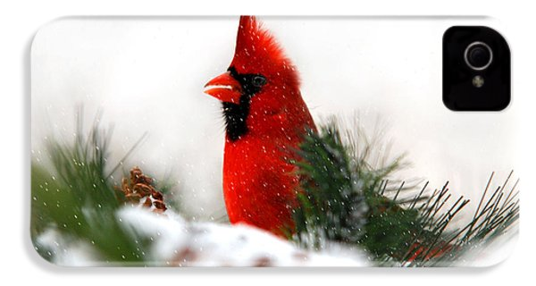 Red Cardinal IPhone 4 Case by Christina Rollo