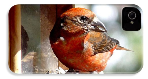 Red Crossbill IPhone 4 / 4s Case by Marilyn Burton
