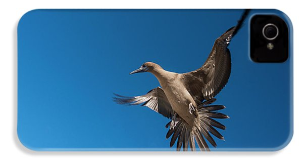 Red-footed Booby (sula Sula Websteri IPhone 4 / 4s Case by Pete Oxford