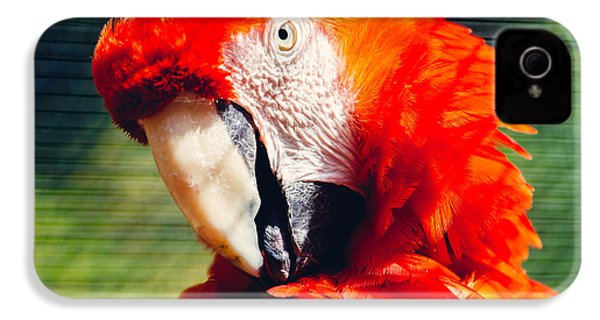 Red Macaw Closeup IPhone 4 Case by Pati Photography