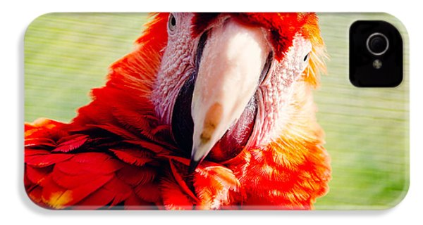 Red Macaw IPhone 4 Case by Pati Photography