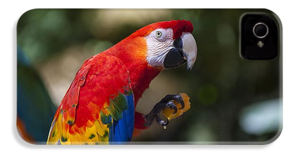 Red Parrot  IPhone 4 Case by Garry Gay
