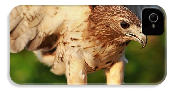 Red Tailed Hawk Hunting IPhone 4 Case by Dan Sproul