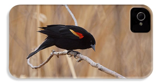 Red Winged Blackbird 1 IPhone 4 / 4s Case by Ernie Echols
