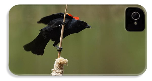 Red Winged Blackbird 3 IPhone 4 / 4s Case by Ernie Echols