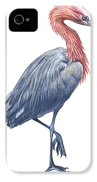 Reddish Egret IPhone 4 Case by Anonymous