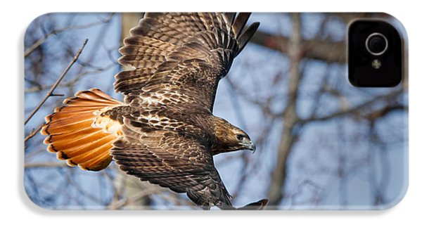Redtail Hawk IPhone 4 Case by Bill Wakeley
