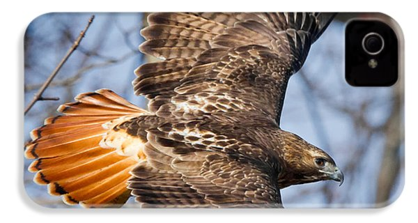 Redtail Hawk Square IPhone 4 Case by Bill Wakeley