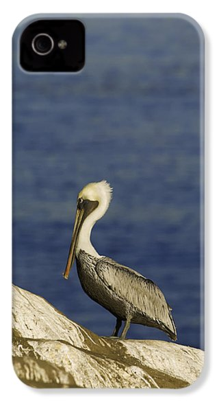 Resting Pelican IPhone 4 Case by Sebastian Musial