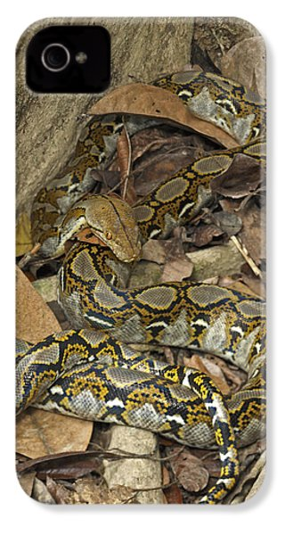 Reticulated Python IPhone 4 Case