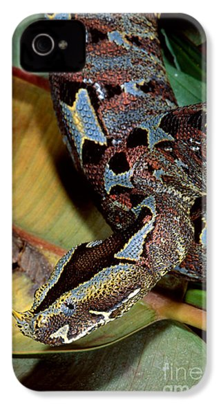 Rhino Viper IPhone 4 Case by Gregory G. Dimijian, M.D.