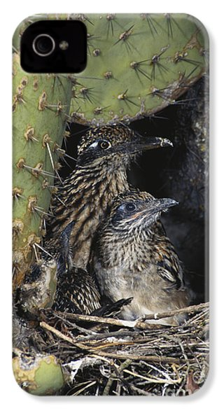 Roadrunners In Nest IPhone 4 / 4s Case by Anthony Mercieca
