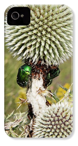 Rose Chafers And Ants On Thistle Flowers IPhone 4 Case by Bob Gibbons