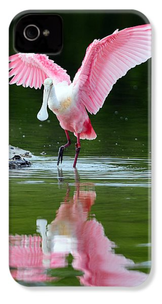 Roseate Spoonbill IPhone 4 Case by Clint Buhler