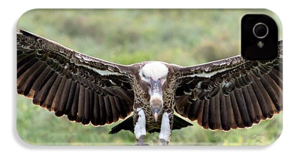 Ruppells Griffon Vulture Gyps IPhone 4 Case by Panoramic Images
