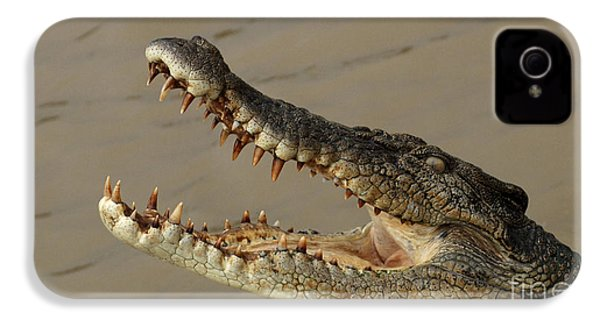 Salt Water Crocodile 1 IPhone 4 Case by Bob Christopher