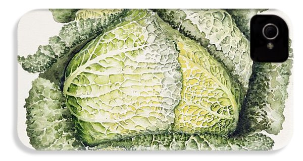 Savoy Cabbage  IPhone 4 Case