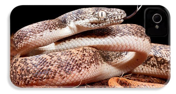 Savu Python In Defensive Posture IPhone 4 / 4s Case by David Kenny