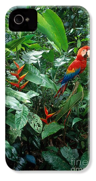 Scarlet Macaw IPhone 4 Case by Art Wolfe