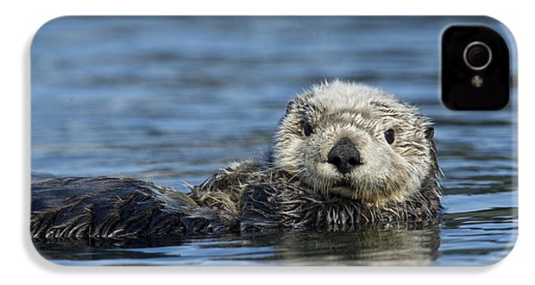 Sea Otter Alaska IPhone 4 Case by Michael Quinton