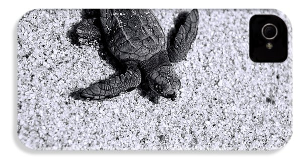 Sea Turtle In Black And White IPhone 4 Case by Sebastian Musial