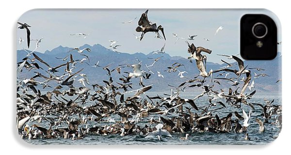 Seabirds Feeding IPhone 4 / 4s Case by Christopher Swann