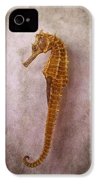 Seahorse Still Life IPhone 4 Case by Garry Gay