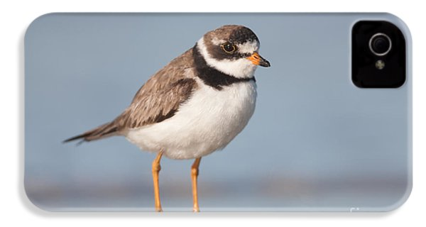 Semipalmated Plover IPhone 4 Case by Clarence Holmes