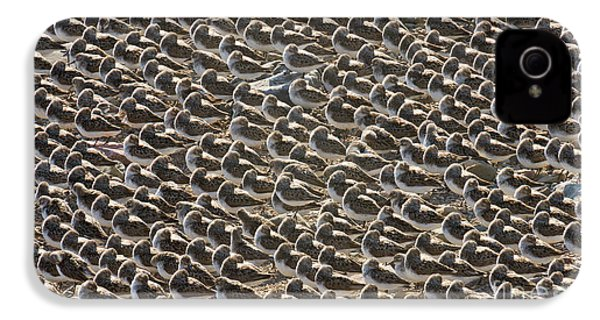 Semipalmated Sandpipers Sleeping IPhone 4 Case by Yva Momatiuk John Eastcott