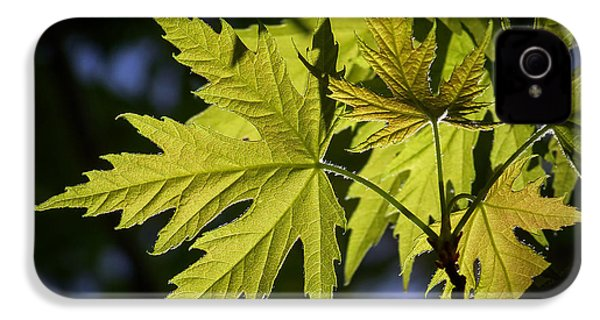 Silver Maple IPhone 4 Case by Ernie Echols