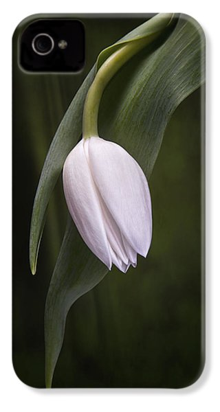Single Tulip Still Life IPhone 4 Case by Tom Mc Nemar