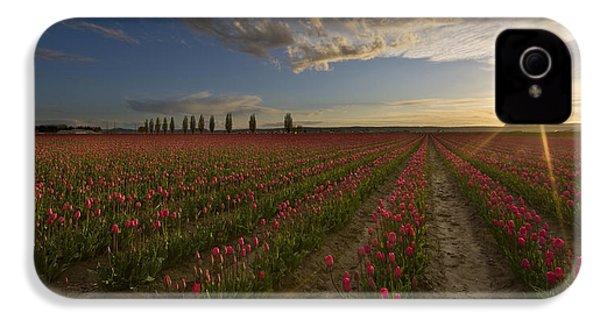 Skagit Tulip Fields Sunset IPhone 4 / 4s Case by Mike Reid