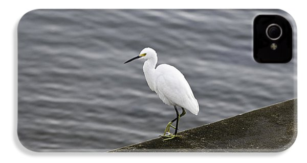 IPhone 4 Case featuring the photograph Snowy Egret by Anthony Baatz