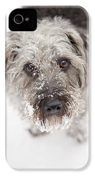 Snowy Faced Pup IPhone 4 Case by Natalie Kinnear