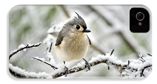 Snowy Tufted Titmouse IPhone 4 Case by Christina Rollo