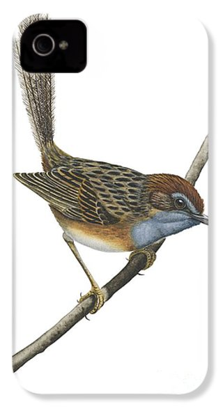 Southern Emu Wren IPhone 4 Case by Anonymous