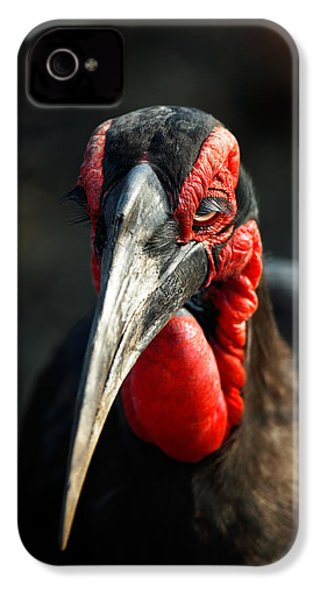 Southern Ground Hornbill Portrait Front View IPhone 4 Case by Johan Swanepoel