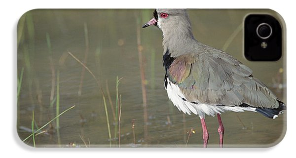 Southern Lapwing In Marshland Pantanal IPhone 4 Case by Tui De Roy