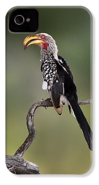 Southern Yellowbilled Hornbill IPhone 4 Case by Johan Swanepoel