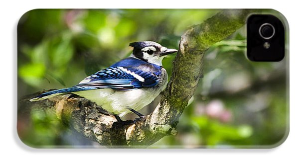 Spring Blue Jay IPhone 4 Case by Christina Rollo