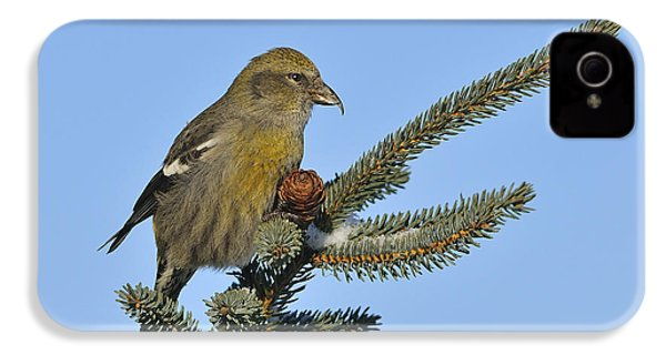 Spruce Cone Feeder IPhone 4 / 4s Case by Tony Beck
