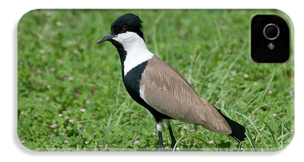 Spur-winged Plover IPhone 4 Case by Nigel Downer