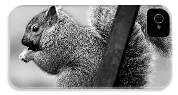 IPhone 4 Case featuring the photograph Squirrels by Ricky L Jones