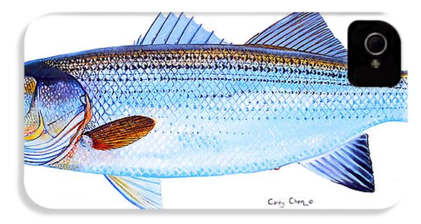 Striped Bass IPhone 4 / 4s Case by Carey Chen