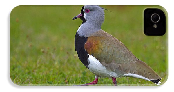 Strutting Lapwing IPhone 4 Case by Tony Beck