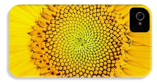 Sunflower  IPhone 4 Case by Edward Fielding