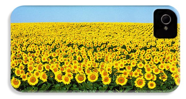 Sunflower Field, North Dakota, Usa IPhone 4 Case by Panoramic Images